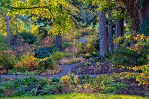 Luscious vegetation visible in Jubilee Wood, Aberglasney Gardens