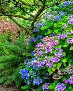Blue and purple Hu