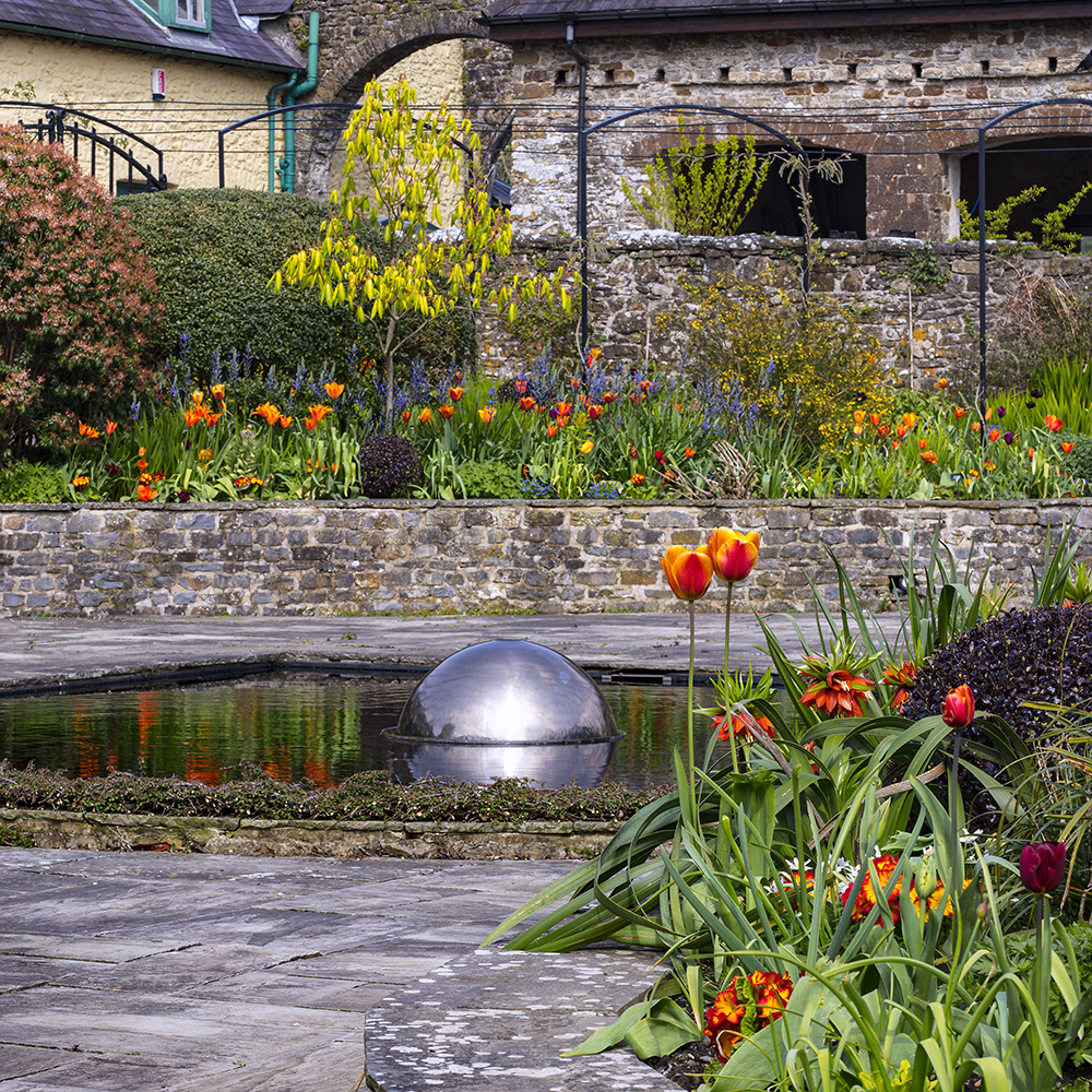 Bold Tulips and Aesculus pavia in the Sunken Garden at Aberglasney